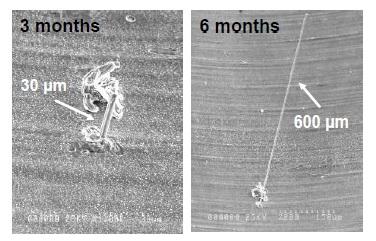 Crecimiento del filamento de estaño a los 3 y a los 6 meses